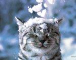 gatto con neve